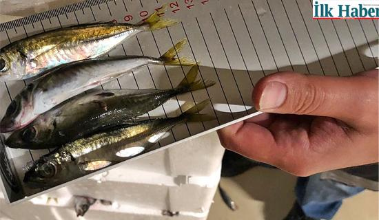 Boy Yasağına Uymayan 6.5 Ton Balığa El Konuldu