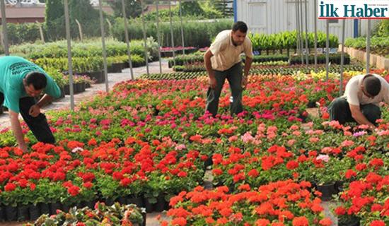 İBB Yerli Çiçek Üreticileriyle Buluşuyor
