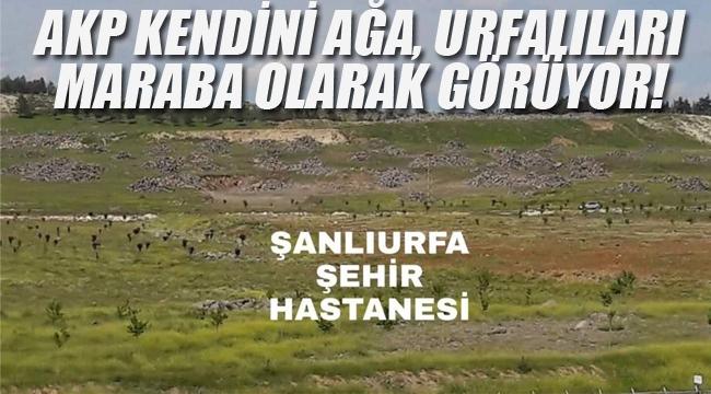 AKP Kendini Ağa, Urfalıları Maraba Olarak Görüyor!