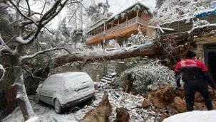 Kartal'da Yoğun Kar Yağışı Nedeniyle Ağaç Devrildi