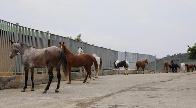 Adalar'daki Atları Sahiplenenlerin Listesi Açıklandı