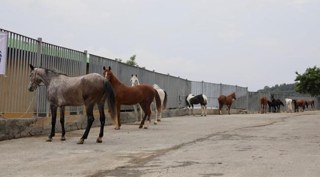 """İBB'den Atlarla İlgili Açıklama """"İBB Atları Belediye, STK ve Üniversitelere Teslim Etti"""""""